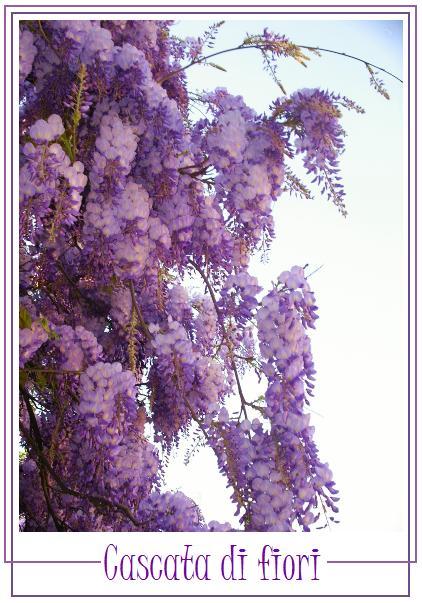 budrio-2009-cascata-di-fiori