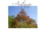 autunno 3